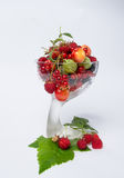 Vase with berry harvest Royalty Free Stock Photography