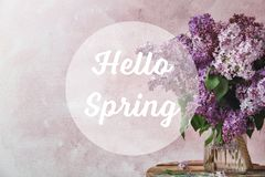 Vase with blossoming lilac on table against color background. Spring flowers royalty free stock image