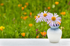 Vase with blue daisy flowers. On meadow background stock photography