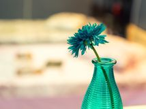 Vase of blue flower with colorful interior Stock Photography