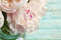 Vase with bouquet of beautiful peony flowers,. Closeup Royalty Free Stock Photos