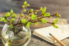 Vase with branches with young shoots of greenery and blurred notebook on the rustic wooden table. Spring awaking concept. Vintage. Toning. Selective focus stock images