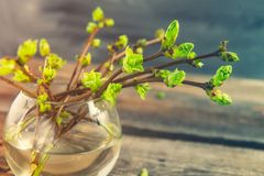 Vase with branches with young shoots of greenery on the rustic wooden table. First small green leaves on a thin branches. Spring a stock photography