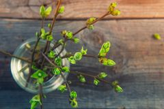 Vase with branches with young shoots of greenery on the rustic wooden table. First small green leaves on a thin branches. Spring a stock photos