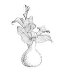 Vase with calla lily flowers. Linear illustration. Black on white Stock Image