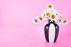 Vase with camomiles. Open composition Stock Photography