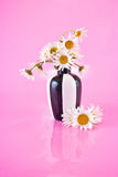Vase with camomiles Royalty Free Stock Photo