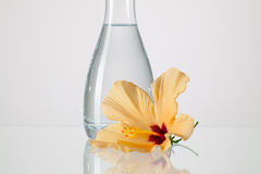 The vase with clean water and hibiskus flower. On a glass table Stock Photography