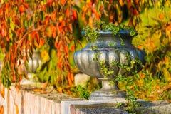 Vase closeup in Arboretum, Sochi, Russia. Vase with scindapsus closeup on the background of dry foliage of trees in Arboretum in sunny uatumn day, Sochi, Russia Stock Images