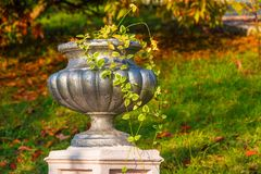 Vase closeup in Arboretum, Sochi, Russia. Vase with scindapsus closeup on the background of grass in Arboretum in sunny uatumn day, Sochi, Russia Royalty Free Stock Images