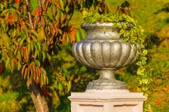 Vase closeup in Arboretum, Sochi, Russia. Vase with scindapsus closeup on the background of grass and tree in Arboretum in sunny uatumn day, Sochi, Russia Royalty Free Stock Photos