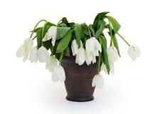Vase complètement de fleurs abaissées et mortes Photographie stock