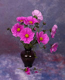 Vase with Cosmos Royalty Free Stock Image