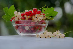 Vase with currants. Vase with red and white currants..on the plate currant berries are of two types Royalty Free Stock Image