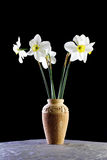 Vase of daffodils. Close up of vase of blooming daffodils isolated on black background Stock Photography