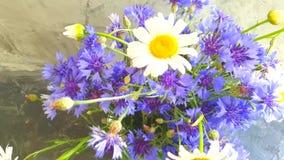 Vase de bleuet, camomille, mouvement lent banque de vidéos