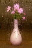 Vase de fleurs Images stock