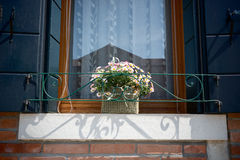 Vase de fleurs photos stock