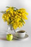 Vase de verre avec des branches d'une mimosa, d'un café de la tasse PO et d'une pomme sur un fond blanc Images libres de droits