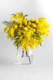 Vase de verre avec des branches d'une mimosa sur un fond blanc Photo stock