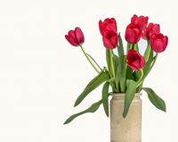 Vase of Deep Pink Tulips in a Rustic Vase. A rustic vase of dark pink tulip isolated on a white background. Position to one side leaving white copy space Royalty Free Stock Photography