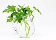 Vase der Petersilie-(Petroselinum crispum) Lizenzfreie Stockfotos