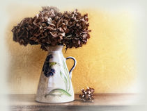 Vase with dried hydrangeas. White vase with dried hydrangeas on a table Stock Image