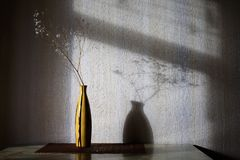 Vase with a dry branch. Shadow of the vase with a dry branch on the wall Stock Photos