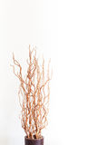 Vase with dry branches on white Royalty Free Stock Images