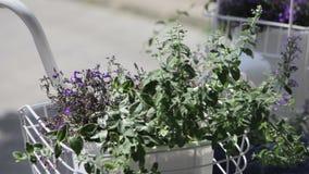 Vase extérieur à bicyclette avec les fleurs et les buissons bleus clips vidéos