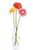 vase för exponeringsglas för buketttusenskönagerbera Arkivbild
