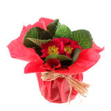 vase för pap för härlig brödost slågen in röd Royaltyfria Foton