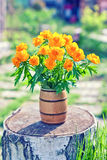 Vase filled by beautiful spring orange flowers of globeflowers on the stub Royalty Free Stock Image