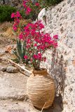Vase with flower in Monemvasia Royalty Free Stock Image