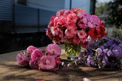 Vase of flower, pink geranium bouquet Royalty Free Stock Image