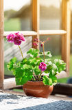 Vase with a flower on the rural windowsill Stock Photography