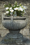 Vase with flowers. Door vase in cement with white flowers in front of the church of San Biagio, Inverigo Italy Stock Photo