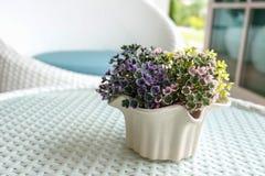 Vase flowers. In living room Royalty Free Stock Image