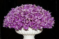 Vase with flowers - pink orchids Royalty Free Stock Photo