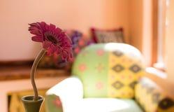 Vase flowers Royalty Free Stock Photo