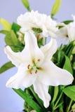Vase Of Flowers Stock Photos