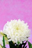 Vase Of Flowers Stock Images