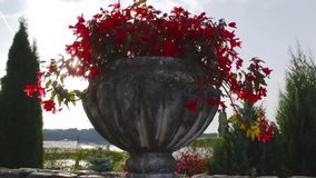 Vase with flowers and sun. Shoot with slider stock video footage
