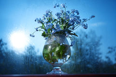Vase with forget-me Royalty Free Stock Photos