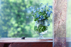 Vase with forget-me Stock Image
