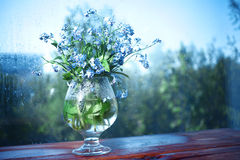 Vase with forget-me on the window Stock Photography
