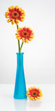 Vase with Gerbera Flowers Royalty Free Stock Image