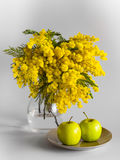 Vase of glass with branches of a mimosa on a white background and apples on a plate Stock Image