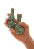 Vase an Hand Stockbilder