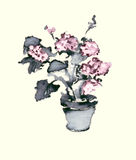 Vase with hydrangea watercolor ink illustration Stock Photos